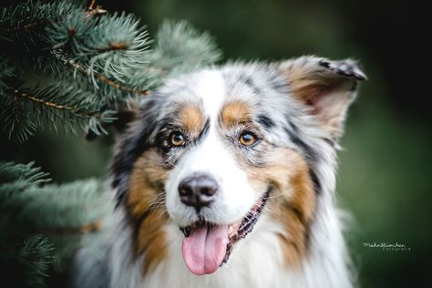 Hunde Mohnblumchen Fotografie Hunde Tag Hunde Hundehimmel