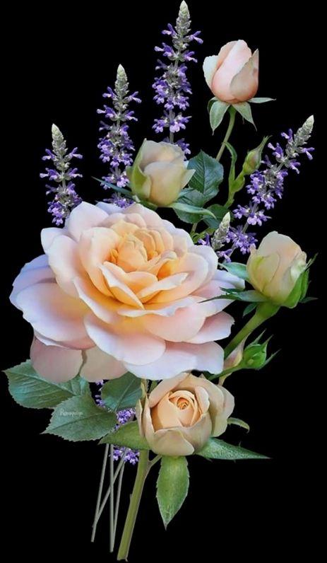 Water Gardening Direct Discount Codes Olsens Garden Payson Utah Gardening Essay Ielts Examples Youtube Rosas Pretas Belas Fotos De Flores Rosas Amarelas