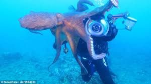 Image Result For Photo Of Aggressive Octopus Octopus Giants Aggressive