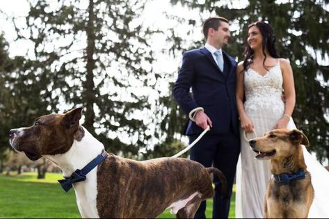 Ramblewood CC is a pet-friendly ceremony-only wedding venue! Call our Private Events Director for more information! #RamblewoodCountryClub #RonJaworskiWedding #RonJaworskiGolf #GolfCourseWedding #OutdoorWedding #WeddingVenue #SouthJerseyWedding #RusticVenue #PetFriendlyWedding #OutdoorCeremony