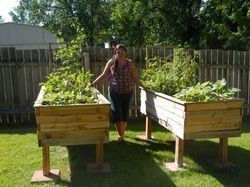 Build A Cheap Raised Bed From Pallets Vegetable Garden Raised Beds Garden Boxes Raised Diy Raised Garden