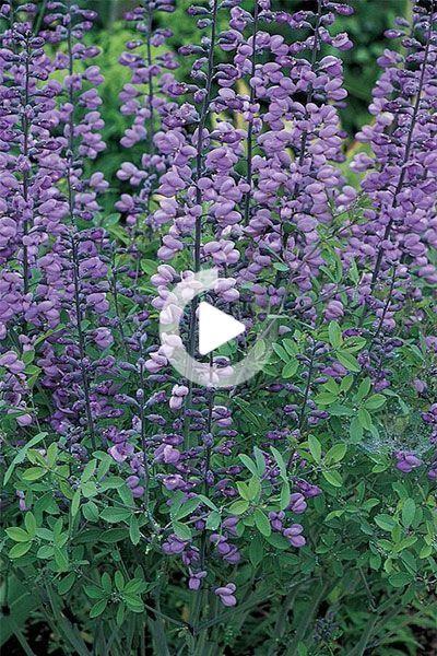 10 Pflanzen Die Sich Selbst Fur Garten Im Prariestil Aussaen In 2020 Pflanzen Garten Stil