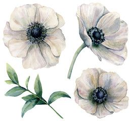 Watercolor White Anemone Set Hand Painted Flowers With Eucalyptus Leaves Isolated On White Background Natural I Flower Painting Flower Drawing Anemone Flower