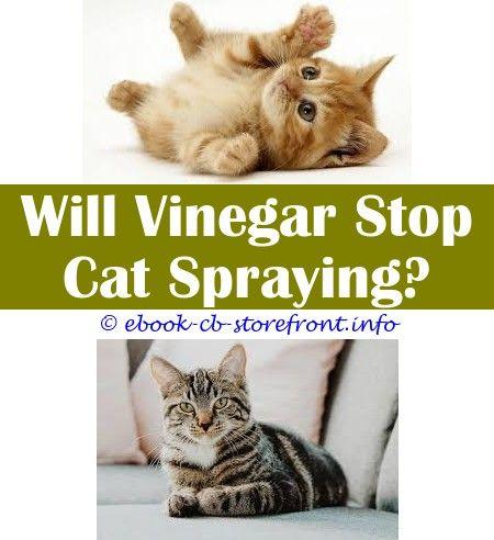 Pin En Carpets Cat Spray