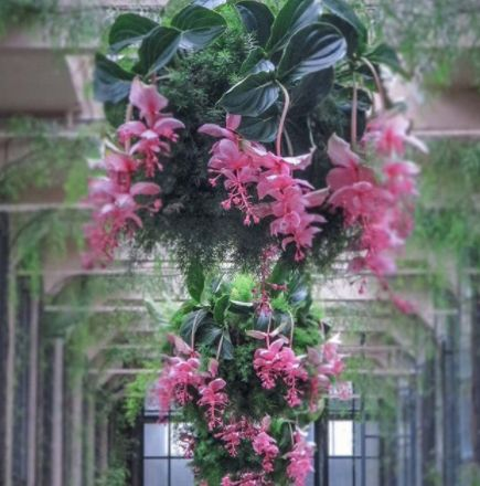 The Most Magnificent Plant
