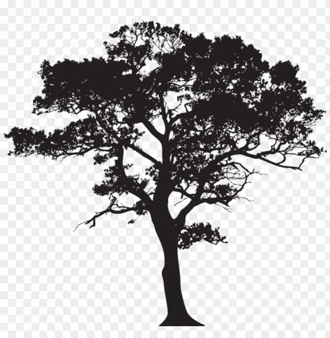 Gum Tree Silhouette Png Image With Transparent Background Png Free Png Images Tree Drawing Tree Silhouette Tree Watercolor Painting
