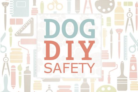Dog DIY Safety: Keep these tips in mind!