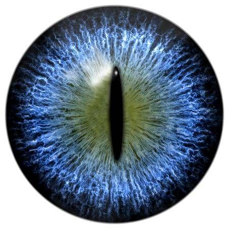 Blue Cat Or Reptile Eye With Narrow Pupil Reptile Eye Iris Eye Reptiles