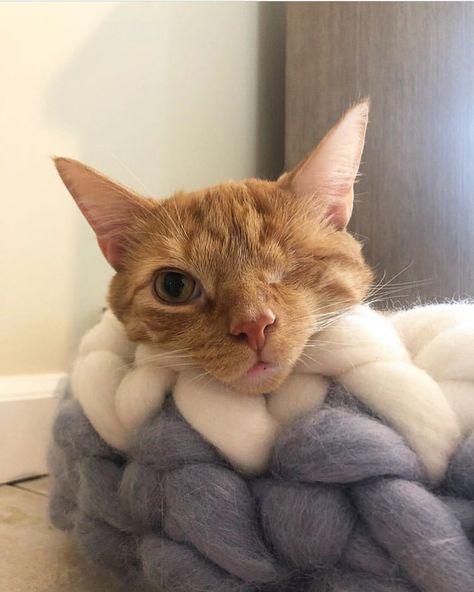 14 Cat Adoption Photos That Will Definitely Melt Your Heart Cat Adoption Beautiful Kittens Cats