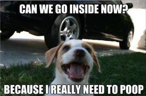 Funny Animal Pictures Of The Day  33 Pics