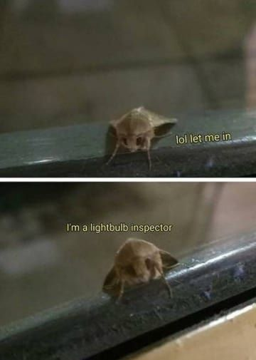 Please Enjoy These 32 Moth Memes That Made Me Cry From Laughing Crazy Funny Memes Fresh Memes Funny Memes