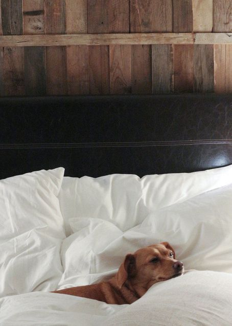 The 1 Hotel Central Park Is A Pet Friendly Luxury Hotel That