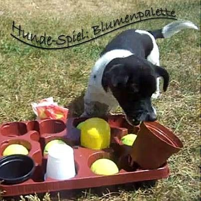 Callous Dog Training Hacks Dogismyfamily Traindogexercise Hundespiele Hunde Tricks Fur Hunde