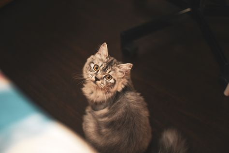 Brown Cat On Wooden Floor Discount Home Decor Home Decor Uk Wholesale Decor