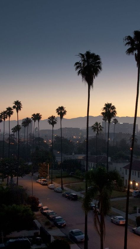 Los Angeles Palm Trees Iphone California In 2019 Tree Wallpaper