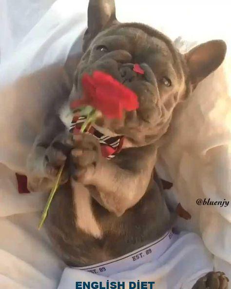 Happy Valentine's day - #day #Happy #Valentines