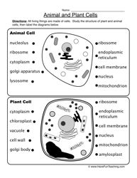 Animal And Plant Cells Worksheet