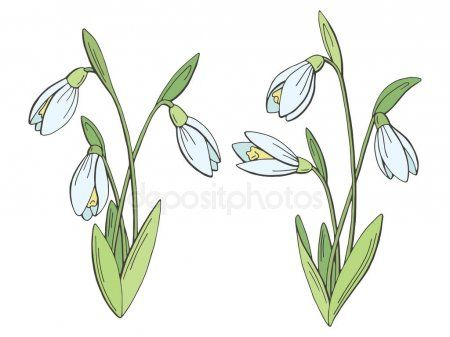 Snowdrop Flower Graphic Color Isolated Sketch Set Illustration Vector S Ad Graphic Color Snowdrop Flowe Flower Graphic Illustration Flower Drawing