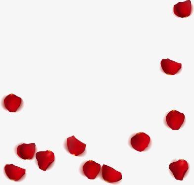 روز البتلة أحمر بتلة الورد البتلة Png وملف Psd للتحميل مجانا Rose Petals Petal Rose