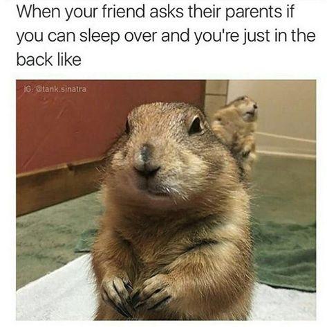 24 zufällige Tier-Memes, die Ihnen Ihren LOL-Fix geben - #die #geben #Ihnen #Ihren #LOLFix #memes #TierMemes #zufällige
