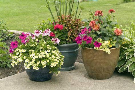 Saveti Za Aranžiranje Cveća U Saksijama I žardinjerama