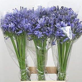 Pin Op Blue Flowers