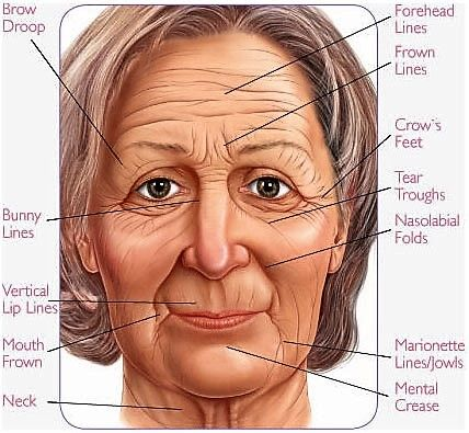 Image result for wrinkle on face