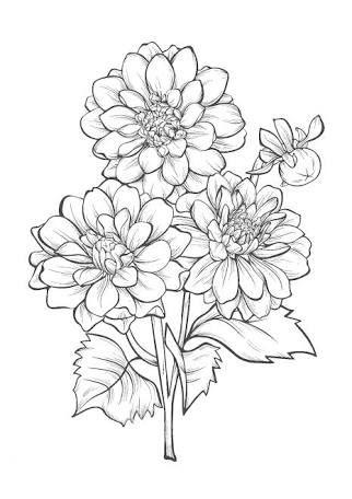 塗り絵 無料 花 簡単 の画像検索結果 塗り絵 無料 花 塗り絵 無料 塗り絵
