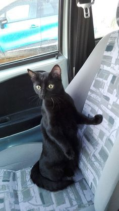 Untitled Black Cats