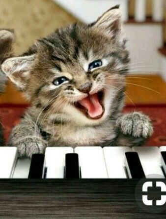 Pin By Colleen B On Happy Cat Happy Cat Cats And Kittens Cats
