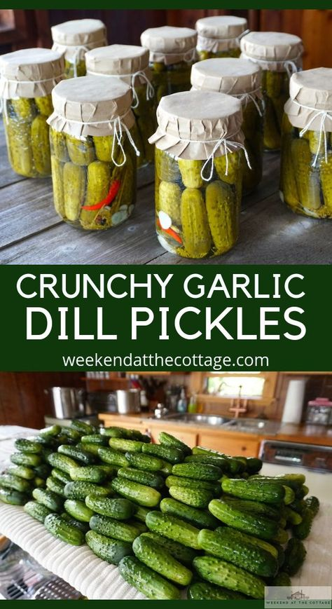 Garlic Dill Pickles Recipe - Weekend at the Cottage It's one of favourite times of the year! If you like CRUNCHY GARLIC DILL PICKLES, this is the recipe for you! The secret to our delicious dill pickles, canning vinegar! Home Canning Recipes, Canning Tips, Cooking Recipes, Pressure Canning Recipes, Canning Labels, Cooking Food, Cucumber Recipes, Dill Pickle Recipes, Crunchy Dill Pickle Recipe