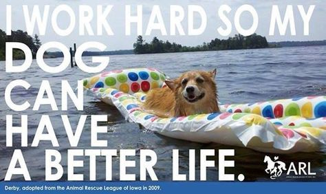 Plus Mi Life Pet Dog Cat Rubber Cleaning Brush Self