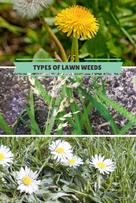 15 Lawn Weeds To Keep an Eye Out For --> http://www.hgtvgardens.com/photos/landscape-and-hardscape-photos/types-of-lawn-weeds?soc=pinterest