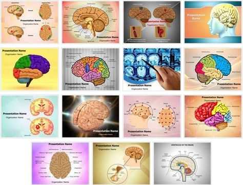 Get #Human #Brain #PowerPoint #Design Bundle This Human Brain - brain powerpoint template