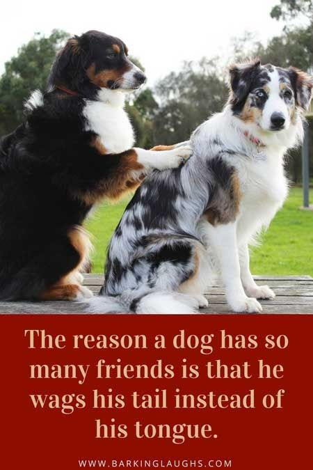 Pin by Obsessed With Dogs on Quotes | Best dog quotes, Dog