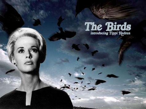 Classic Movies Wallpaper: Classic Film,The Birds