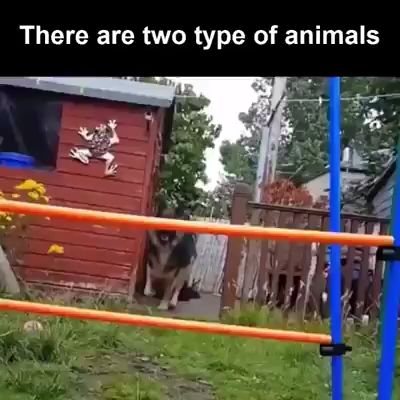 There are two type of animals