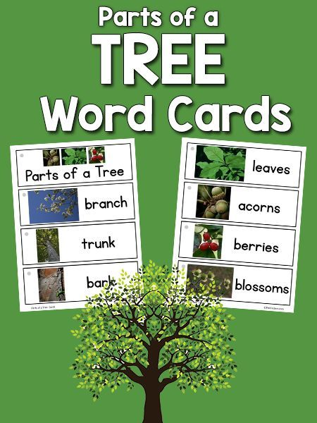 Parts of a Tree Picture Word Cards | Pre k Creative