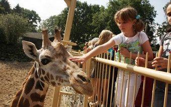 Das andere Holland: Zoos #urlaub #niederlande #ferien #familienurlaub #ausflug #kurzurlaub #giraffe #zoo #dasandereholland