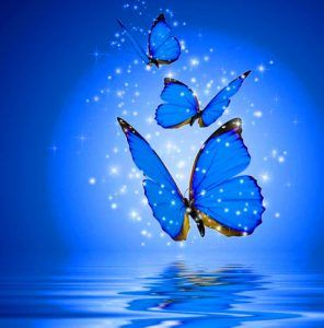 Butterfly Whatsapp Dp Images Hd Download Whatsapp Dp Images Wallpaper For Whatsapp Dp Whatsapp Dp Images Hd
