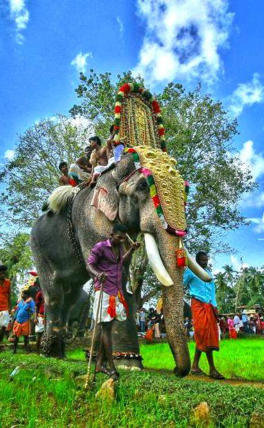 Thechikottukavu Ramachandran Hd Photos With Images Elephants