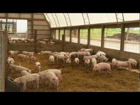 Raising Pigs the Natural Way