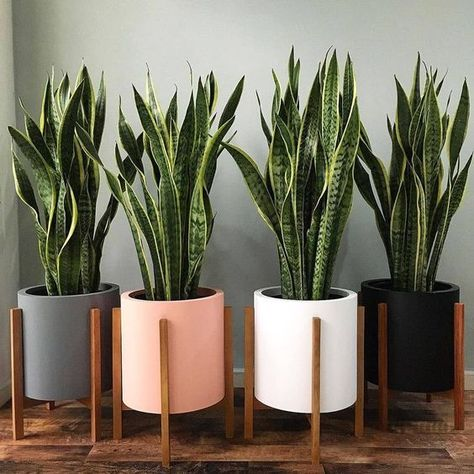Easy and Fun Tips for Designing Your Indoor Garden living room Best Picture For house plants decor living room For Your Taste You are looking for something, and it is going to tell you exactly what yo Best Indoor Plants, Cool Plants, Green Plants, Pots For Plants, Indoor Plant Decor, Indoor Flower Pots, Sun Plants, Indoor Planters, Flowering Plants