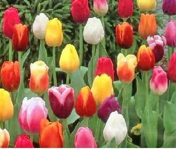 30 Best Agriscience Standard Images Plants Planting Flowers
