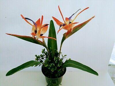 Paradise Plant Silk Flowers