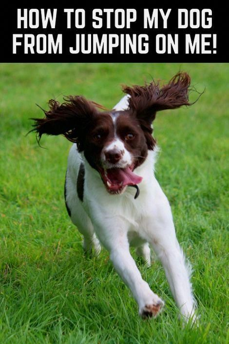 Dog Training Ideas Every Single Thing You And Your Pet Will Help