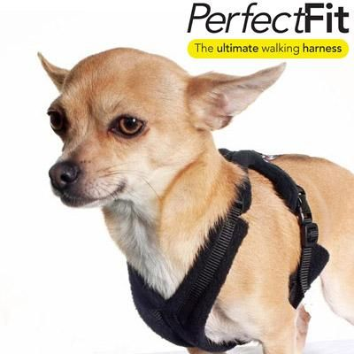 Chihuahua Coats Peruvian Dog Jumpers Dog Accessories My Chi