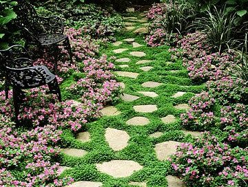 Pin By Melanie Pierce On Gardening Seed Saving Beautiful Gardens Ground Cover Plants Garden Pathway