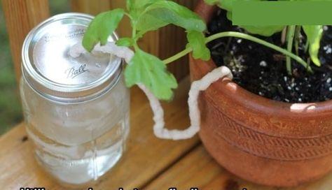 Comment Arroser Vos Plantes Pendant Votre Absence Arroser Plante