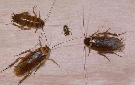 How to Get Rid of Roaches in the Kitchen ...